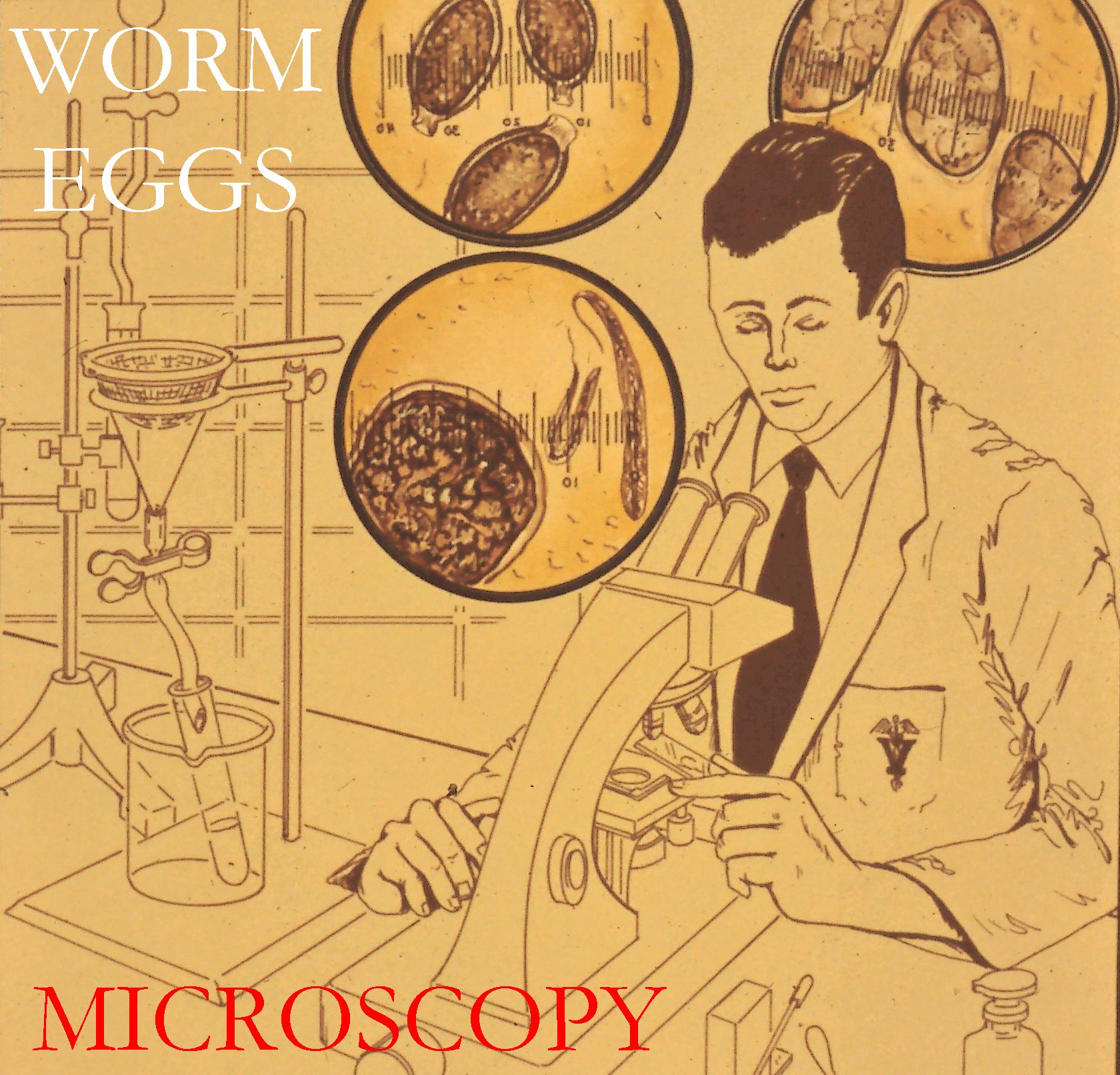 Website Microscopy Photo
